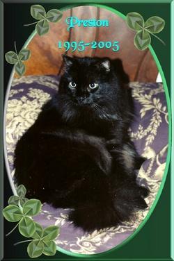 Preston Kitty-cat <i>Presy Boy</i> Gillespie