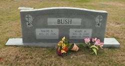 David D Bush