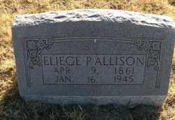 Eliege Polk Allison