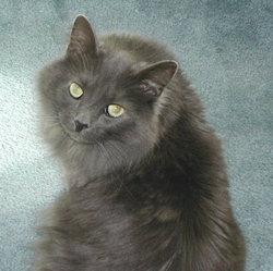 Dallas (cat)
