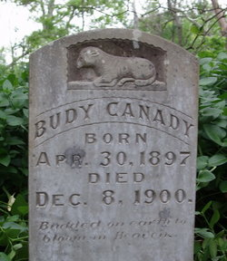 Budy Canady
