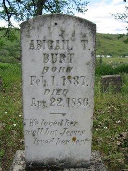 Abigail T Burt