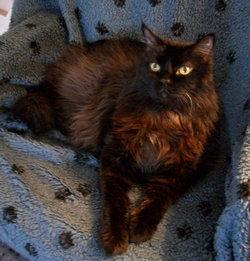 Simon (cat)