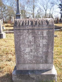 Willie D Whitney
