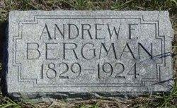 Andrew F Bergman
