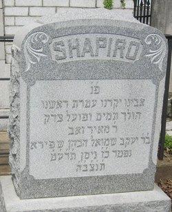 Meyer W Shapiro