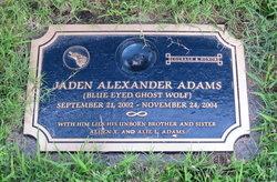 Alden X Adams