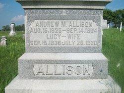 Andrew M Allison
