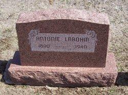 Antonie Labohm