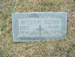 Rosier Bush