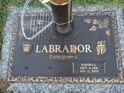 Aurora <i>Livelo</i> Labrador