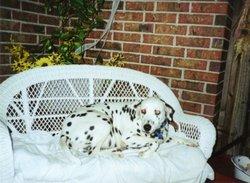 Spot Dog Meade