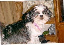 Pudgee Little Miss Faithful Watrous