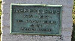 Hamburg Belle