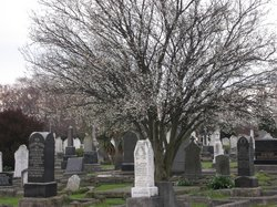 Sydenham Cemetery