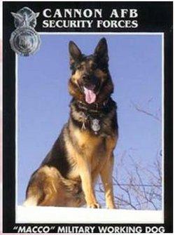 Macco (MWD) Dog