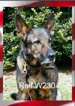 Ralf (MWD) Dog