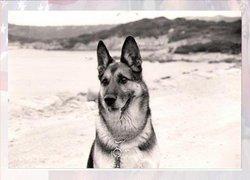 Dexter (MWD) Dog