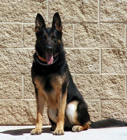Uro (MWD) Dog