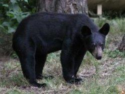 Sarah Bear