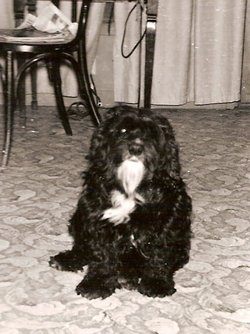Pepper Dog Eagan