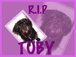 Toby Dorky Dog Cochran