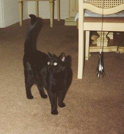 Onyx <i>Cat</i> Bramham