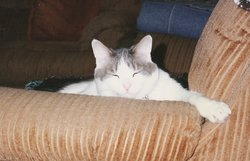 Theodore Theo <i>Cat</i> Kagarise