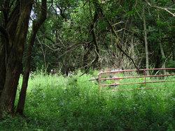 Tunnell-Clark Cemetery