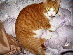 JayJay Kitty