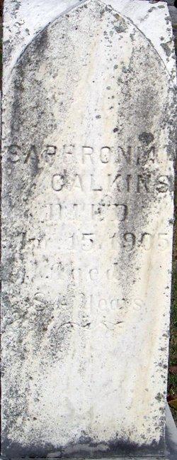 Saphronia <i>Tillotson</i> Calkins