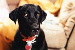 Rex The Dog Nibbe