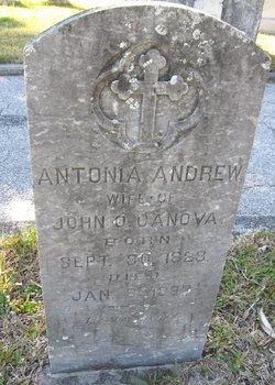 Antonia Andrew Canova