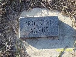 Prockino Agnus
