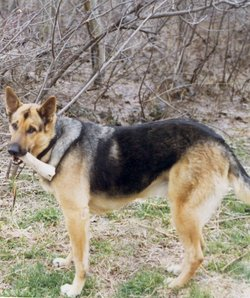 Tristan Thumper <i>Canine</i> Heywood