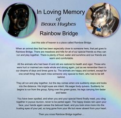 Beaux Bodacious <i>Budlight</i> Hughes