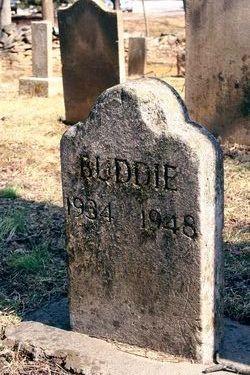 Buddie