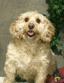 Buddy Dog Pinkerton