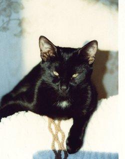Mohrchen Cat