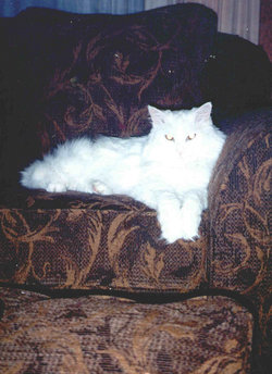Angel the Kitty Cat Angel-Pie Byle