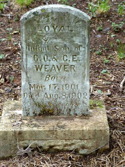 Loyal Weaver