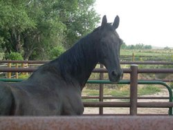 Bond The Horse