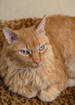 Wrigley The Cat