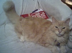 Elijah The Cat