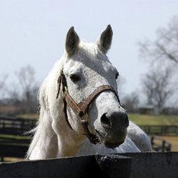 Black Tie Affair The Horse