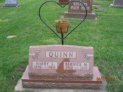 Harry Louis Quinn
