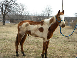 J .T. The Horse