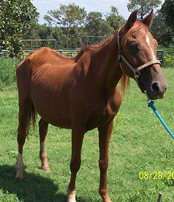 Yahtzee The Horse
