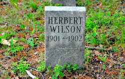 Herbert Wilson