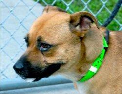 Betty Sweet Shelter Dog
